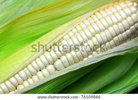 White corn. - stock photo