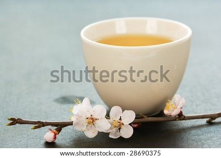 White cup of Tea and Apricot Flowers - stock photo