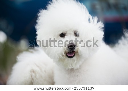 white cute  dog
