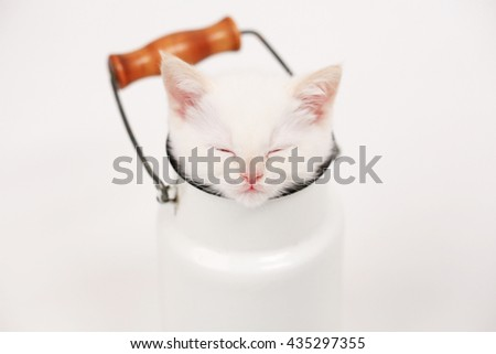 white cute kitten in milk cans