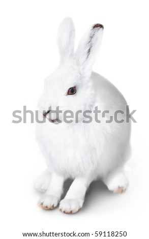 White cute rabbit on a white background - stock photo