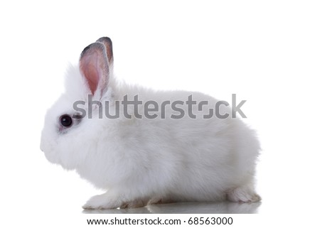 White cute rabbit on a white background - side view