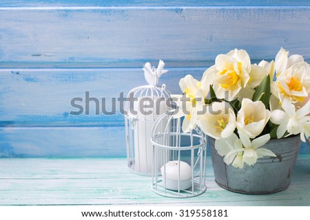 White daffodils and tulips  flowers in bucket  on turquoise  painted wooden planks against blue wall. Selective focus. Place for text.  - stock photo