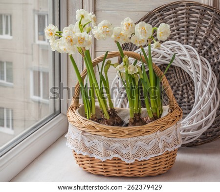 White daffodils in a basket on the window - stock photo