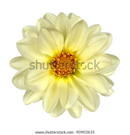 White Dahlia Flower with Yellow Center Isolated on White Background - stock photo