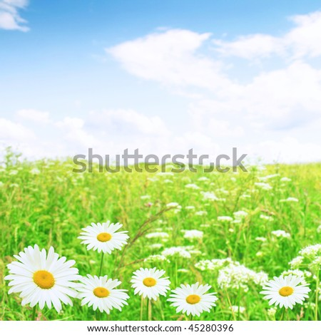 White daisies and blue sky.