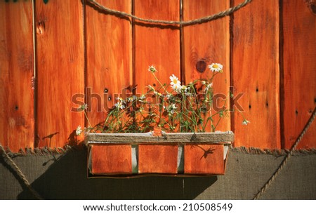 White daisies in a brown pot on a wooden background - stock photo