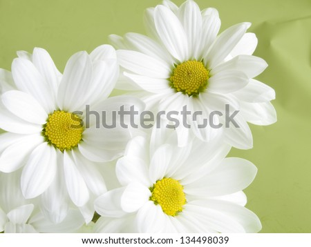 white daisies on green abstract background - stock photo