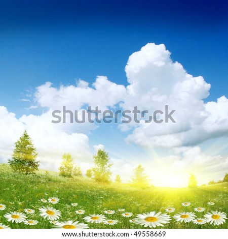 White daisies,trees and sun. - stock photo