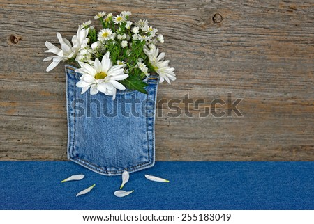 white daisy bouquet in blue jean pocket with loose petals - stock photo