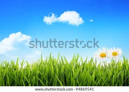 White daisy in grass against blue sky - stock photo