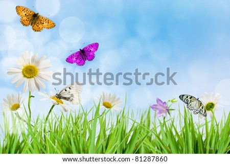 White daisywheel with butterfly on background blue sky - stock photo