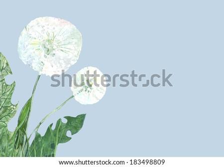 white dandelions against a sky - stock photo
