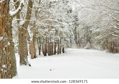 White deciduous frosty snow covered tree alley around a snow covered road in winter - stock photo