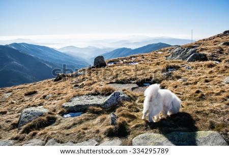 White dog and Low Tatras mountains. Hiking theme. Seasonal natural scene. - stock photo