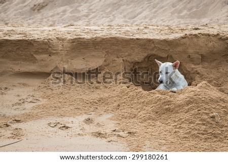White dog digging a hole in the sand at the beach background, Thailand - stock photo