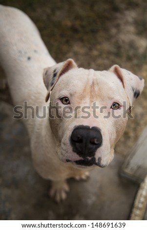 White dog looking up for his picture - stock photo