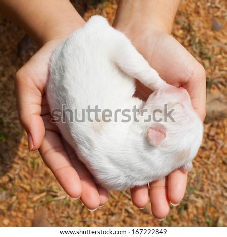 white dog newborn in girl hands - stock photo