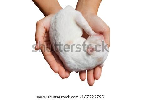 white dog newborn in girl hands on isolated white - stock photo