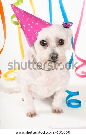 White dog, party hat and streamers - stock photo