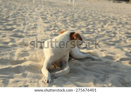 white dog relaxing on beach sand in Thailand