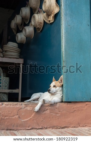 White dog resting in a hat shop, Trinidad, Cuba