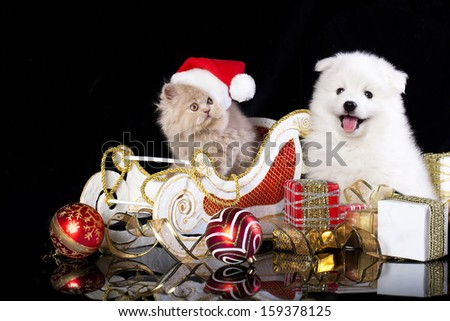 White dog spitz  and kiten Persian  wearing a santa hat, cat and dog - stock photo