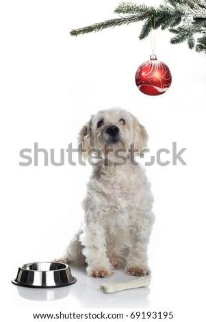 White dog under christmas tree - stock photo