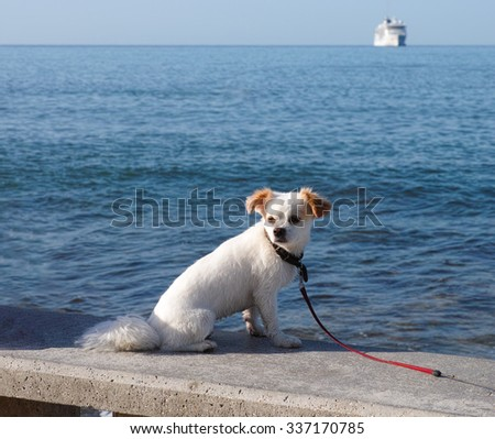 White dog waiting owner on stone bench near the sea. - stock photo