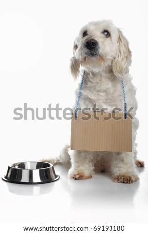 White dog wearing blank cardboard sign around neck waiting for food - stock photo