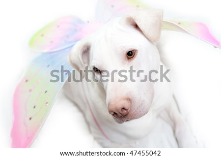 White dog with Angel Wings - stock photo