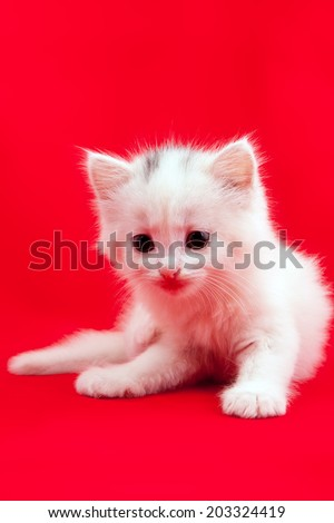 White domestic cat laying down on a red background - stock photo