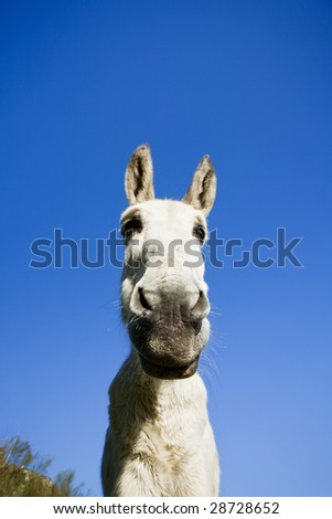 White donkey over clear sky. Focus on eyes.