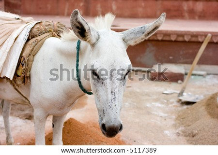 white donkey working on building