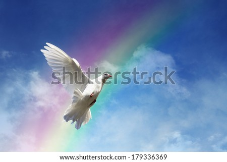 White dove against clouds and rainbow concept for freedom, peace and spirituality - stock photo