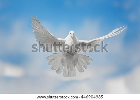 White dove flying against the blue sky with clouds - stock photo