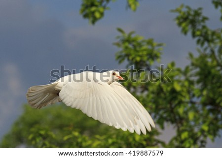 white dove flying among the trees, cloudy sky, a bird symbol - stock photo