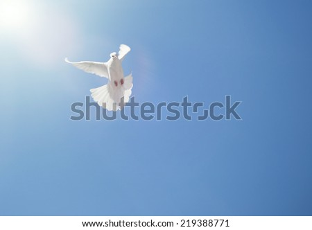 White dove flying in the clouds on background blue sky