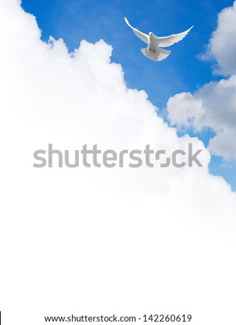 White dove flying in the sky. Template with a text field. - stock photo