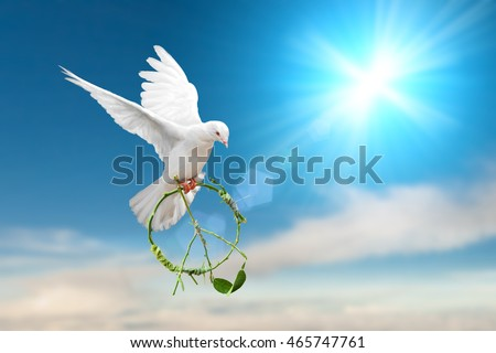 white dove holding green branch in pacification sign shape flying on blue sky for freedom concept in clipping path,international day of peace 2017