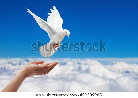 White Dove out of the hand on blue sky background and international day of peace 2016
