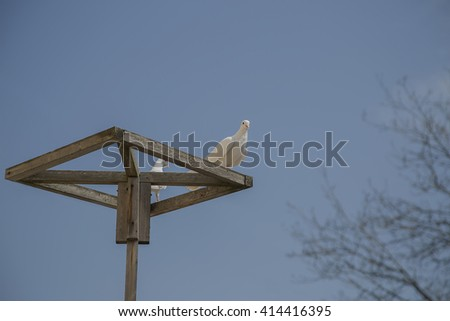 White dove sitting on a wooden rack