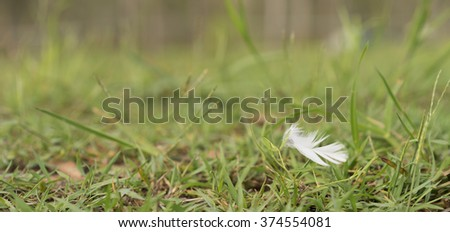 White Downy Feather Blowing in Wind over green grass background - stock photo