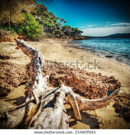 white driftwood in Mugoni shoreline. Processed for hdr tone mapping effect - stock photo