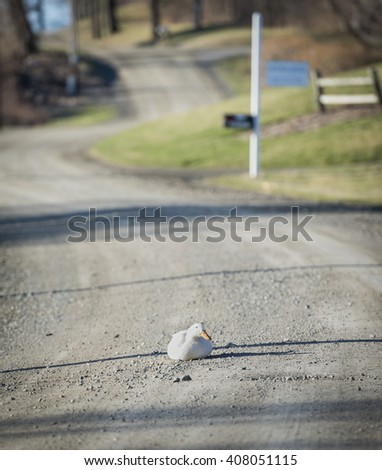 White Duck in the Road