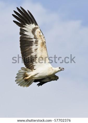 White eagle and blue sky - stock photo