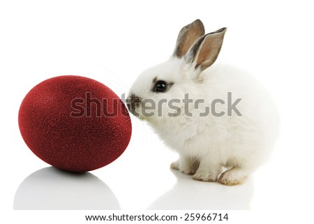 White Easter Bunny with red egg on white background with reflections - stock photo