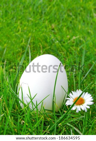 White easter egg on green meadow.