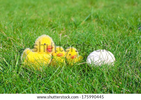 White egg in green grass and chickens closeup - stock photo