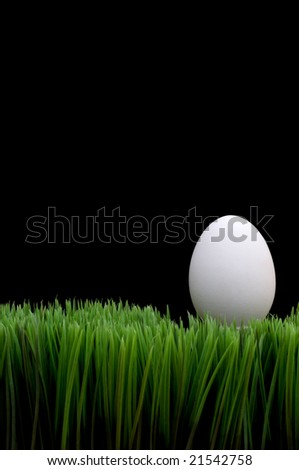 White egg on grass with a black background